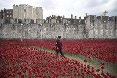 """Yeoman Serjeant Bob Loughlin admires a section of an installation entitled """"Blood Swept Lands and Seas of Red"""" by artist Paul Cummins, made up of 888,246 ceramic poppies in the moat of the Tower of London, to commemorate the First World War on Monday in London. Each ceramic poppy represents an allied victim of the First World War and the display is due to be completed by Armistice Day on Nov. 11, 2014."""