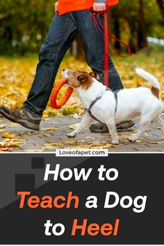 How to Teach a Dog to Heel. There are a lot of methods that many professionals suggest for training your dog. The best method to train your dog to heel is to lure him and then reward. Online Pet Store, Dog Potty, Dog Information, Homemade Dog Treats, Dog Care Tips, Dog Hacks, Dog Training Tips, New Puppy, Dog Supplies