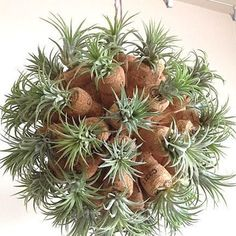 Air Plant Cork Sculpture from Art of Plants How cool is this!!