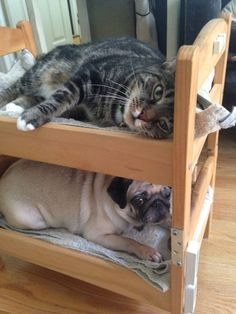 Can a dog and a cat be bunk bed mates? Seems so! - IKEA Hackers