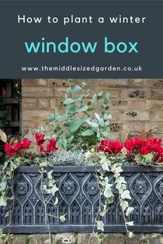 How to arrange a long-lasting window box with winter plants and flowers for maximum curb appeal #gardening #middlesizedgarden #backyard #garden Winter Window Boxes, Window Box Plants, Container Plants, Container Gardening, Garden Privacy, Low Maintenance Garden, Winter Garden, Winter Plants, Colorful Garden