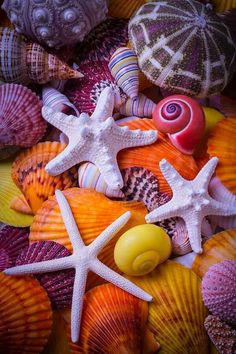 Three white starfish among colorful sea shells, a beautiful collection of marine life. Beach Wallpaper, Wallpaper Backgrounds, Iphone Wallpaper, Seashell Painting, Shell Beach, Wow Art, Shell Art, Color Of Life, Ocean Life