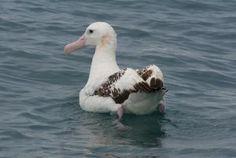 Favourite poem: The Albatross