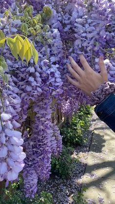 Beautiful Nature Scenes, Beautiful Flowers Garden, Amazing Flowers, Love Flowers, Flower Iphone Wallpaper, Flower Video, Fruit Photography, Backyard Garden Design, Wisteria
