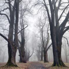 Sleepy Hollow (Germany) by Kilian Schönberger