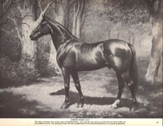 Standardbred Horse, George Wilkes, Great Sire, George Ford Morris Print, 1952