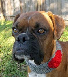 Sweetheart Soft Crochet Dog Scarf, Cowl, Dog Collar, Dog Neck