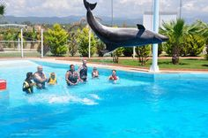 Swim with Dolphins in Alanya This unforgettable experience is waiting for you in Sealanya Dolphin Park. Let your dream come true! Swim with dolphins, touch and feel them.Swimming with dolphins is a special activity because of that booking in advance is strongly recommended. It can be done every day in the morning or afternoon. Pick up and drop off service is available for any hotel in Alanya. Children 0-4 years old are not allowed to swim with dolphins, 5-7 years old child mus...