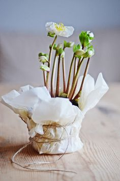 potted flowers wrapped in tissue + twine