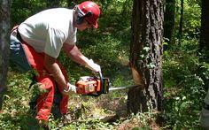 Wer gelegentlich Bäume sägt, zum Beispiel für Brennholz, oder ein Vollzeit-Waldarbeiter ist, lebt gefährlich. Deswegen muss man _immer_ die richtigen Schutzmaßnahmen ergreifen!