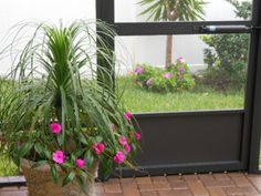 Ponytail & Impatiens on the patio