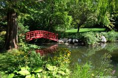 The 10 most common elements of a Japanese Garden are:    Stones  Ponds and shoreline  Islands  Lanterns and basins  Sand and pebbles  Borrowed views  Bridges  Streams  Trees  Paths