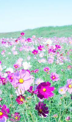 Dreamy Field of Flowers
