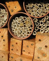 How to make a Bee Hotel: a house for Mason Bees and other Solitary Bees - good article and resources at the bottom of the page! Bug Hotel, Wild Bees, Mason Bees, Bee House, Birds And The Bees, Hotels, Save The Bees, Bees Knees, Farm Gardens