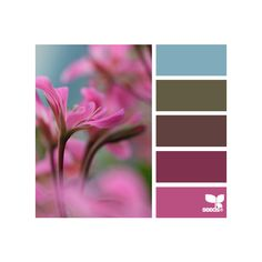 design seeds   search   for all who ♥ color ❤ liked on Polyvore featuring design seeds, backgrounds, colors, color palettes and colours