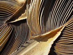 cotton palm fronds