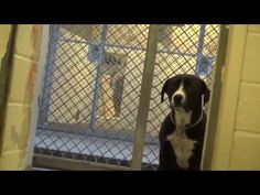 Shelter Dog Can't Contain Emotions, Realizing He's Rescued (WATCH) - Good News Network