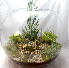 Circus Terrarium Miniature Garden by Little Lands