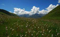 China Inner Mongolia grassland in spring