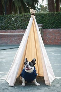 Magoo (a French Bulldog) in a Ware Of The Dog Cable Turtleneck and a Growler Goods Saguaro Dog Tipi.