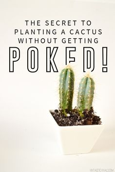 100% Poke-less Cactus Planting (You'll Die When You See What the Trick Is!!)