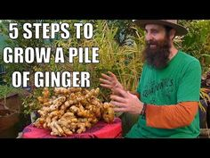 These step-by-step instructions show you how to grow ginger as a houseplant starting with a piece of ginger root from the grocery store. Planting Ginger Root, Grow Ginger From Root, Growing Ginger Indoors, Ginger Plant, Growing Herbs, Growing Vegetables, Organic Gardening, Gardening Tips, Container Gardening