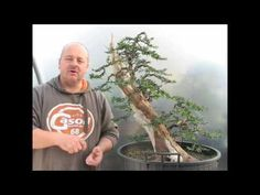 How to Carve and stlye bonsai « Gardening