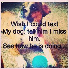 Beabull and dog quotes #bruce #beabull