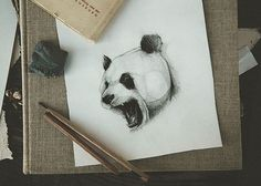 pencil, drawing, illustration, art, retro, vintage, old, panda, animal, abstract,