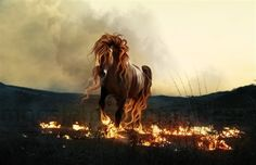 Fire Steed.. Collection of Stunning Horse Manipulations