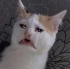 Create Meme Crying Cat Cat Cry Cat Meme Pictures Meme