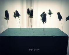 たんぽぽの綿毛ドライの作り方 の回 | Lotus Flower リンゴカンチ Dried Flowers, Diy And Crafts, Green, Image, Flower Preservation, Dry Flowers