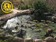 Debra DeDominico tells us her lovely pond was already there when they moved, but the best improvement made was the installation of a filter! They have about 30 beautiful koi that are descendants of their neighbor's pond. Given to Debra as koi fry, they matured in their pond home. Being in Arizona, this pond runs year round without winterization. The lily pads die back on their own, and the koi rest at the bottom. In the spring, everything comes alive. This is certainly an oasis in the… Beauty And The Best, Desert Oasis, Ponds Backyard, Water Garden, Descendants, Koi, Arizona, Filter, Rest
