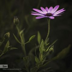 3D by dina90. Please Like http://fb.me/go4photos and Follow @go4fotos Thank You. :-)