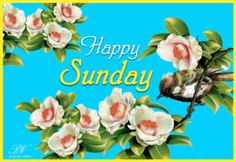 Collection of whatsapp ecards, good morning images, good morning wishes. Sunday Wishes Images, Happy Sunday Images, Happy Sunday Morning, Blessed Sunday, Good Morning Wishes, Good Morning Images, Weekend Quotes, Sunday Quotes, Sunday Motivation
