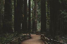 2 - Muir Woods, California Flickr photo