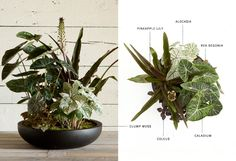 Container Recipe: Planted Centerpieces in The BULLETIN at Terrain