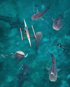 Swimming with the whale sharks in the Philippines. Photo: Dimitar Karanikolov Photography