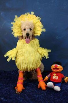 A Dog In A Big Bird Costume
