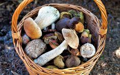Какие питательные вещества содержатся в грибах. Чем полезны грибы для человека Poisonous Mushrooms, Edible Mushrooms, Wild Mushrooms, Stuffed Mushrooms, Fruit Défendu, Giant Mushroom, Mushroom Varieties, Shiitake, Troubles Digestifs