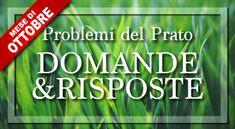 Le Domande sul Prato e i Problemi più Frequenti di Ottobre   Bestprato Bacillus Subtilis, Calm, Portion Plate