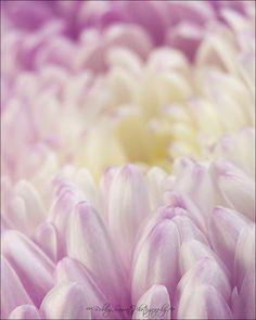 Such lovely delicate colours - always love close-up flower photography