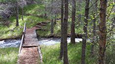 Tag 19: Waldspaziergang in Hallormsstadur