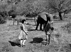 THE ELEPHANT WHISPERER :  Daphne Sheldrick walks fearlessly up to a group of African elephants (warning: don't try this at home!) and one solitary zebra. Learn about her lifesaving work and the DSWT :  www.sheldrickwildlifetrust.org/index.asp