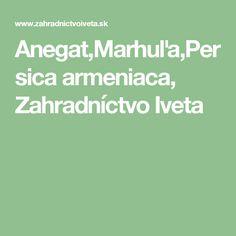 Anegat,Marhuľa,Persica armeniaca, Zahradníctvo Iveta