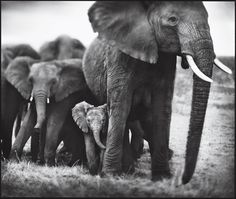 Follow one of Africa's shrinking elephant herds- a good list of trips led by responsible camps and guides.