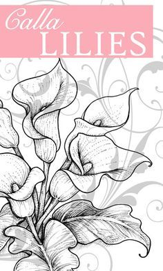 Stamp Happy: Flourishes New Release - Calla Lilies///Pattern. Colouring Pages, Coloring Books, Lilies Drawing, Lilly Flower Drawing, Doodle Drawing, Flower Sketches, Calla Lillies, Painting Patterns, Fabric Painting