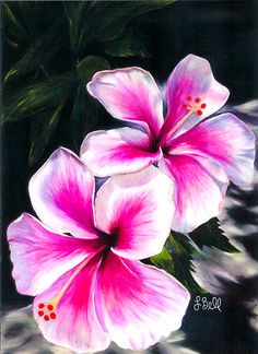Hibiscus Flowers, Pink, Bright, Hawaiian, Tropical - by Laura Bell