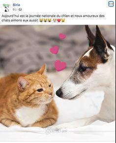 Siria Corgi, Animals, Syria, International Cat Day, Starry Nights, Calendar, Dog, Corgis, Animales