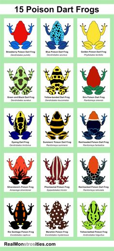 15 Poison Dart Frogs